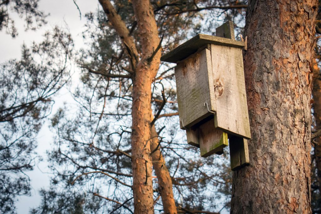 Karmnik na zimę dla ptaków