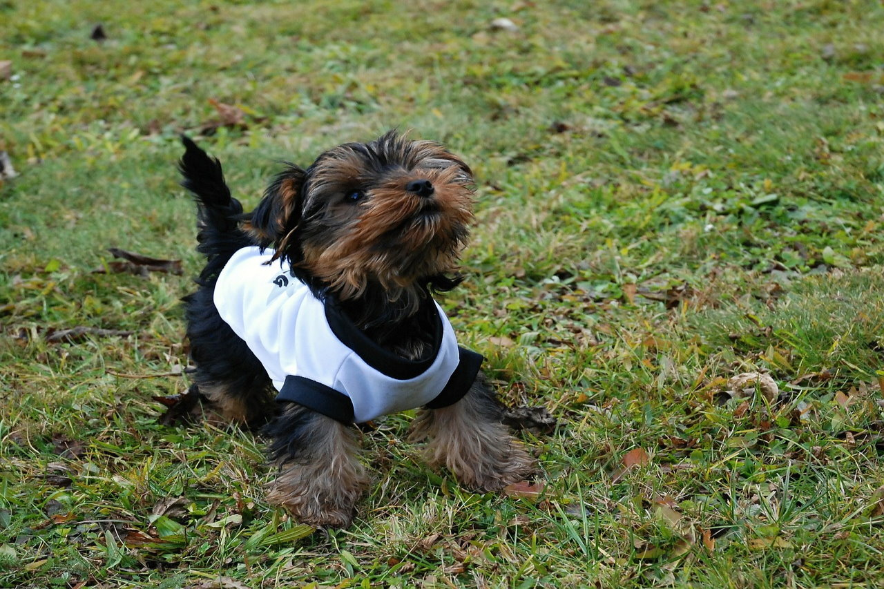 Jakie zalety powinny mieć bluzy dla psa?